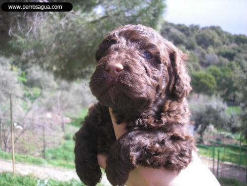 cachorra-con-20-dias