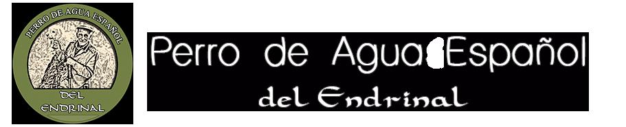 Perro de Agua Español del Endrinal.